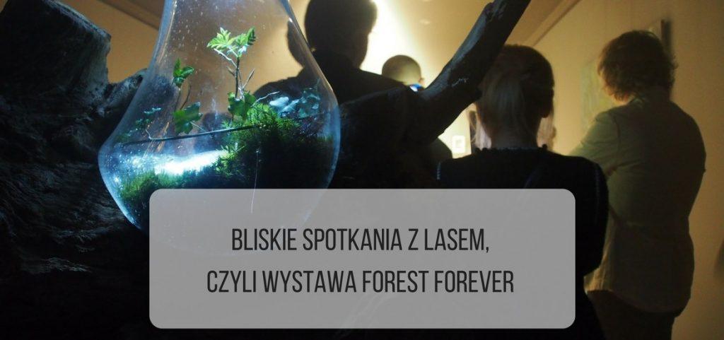 Bliskie spotkania z lasem, czyli wystawa Forest Forever